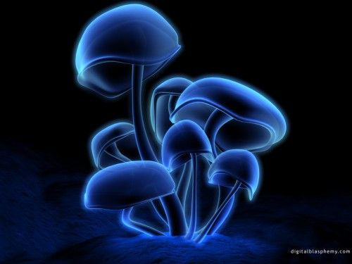 fluorescence6.jpg